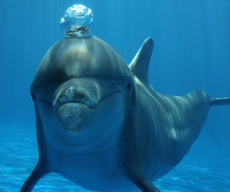 Дельфины прикольное фото